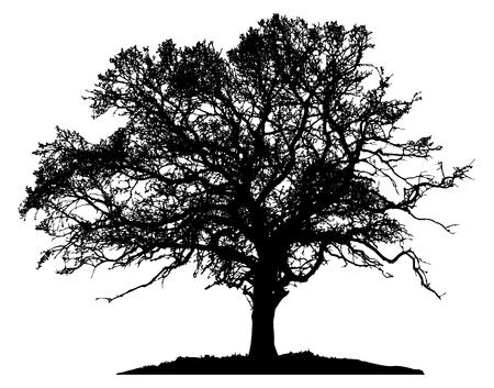 Silhouet boom op witte achtergrond Stock Illustratie