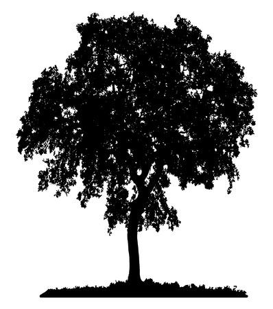 Tree silhouette su sfondo bianco Archivio Fotografico - 55999283