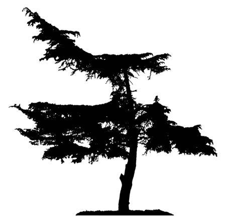 pine tree silhouette: Pine Tree Silhouette