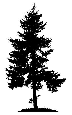 Pine Tree Silhouette Archivio Fotografico - 57388970
