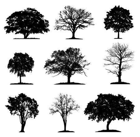 Trees silhouette collection in different layers Illustration