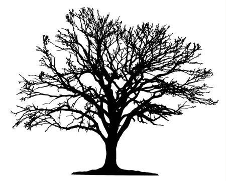 Baum-Silhouette auf weißem Hintergrund