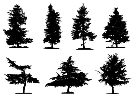 coniferous: Coniferous trees silhouettes collection on white background , on different layers
