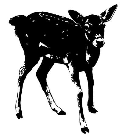 fallow deer: Silhouette of Roe Deer