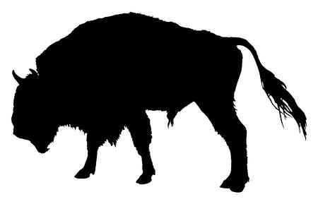 Buffalo. Bisonte americano Archivio Fotografico - 61998522