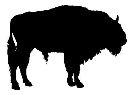 hoofed mammal: Buffalo. American Bison Illustration