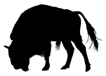 Buffalo. Bisonte americano Archivio Fotografico - 61998521