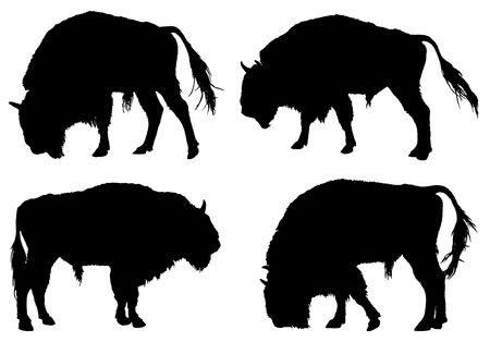 hoofed mammal: Buffalo. American Bison silhouette collection Illustration