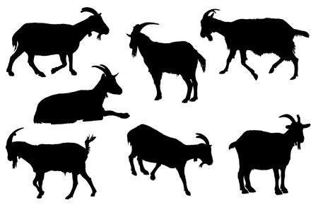 Geiten silhouet collectie. Landelijke boerderijdieren op een witte achtergrond