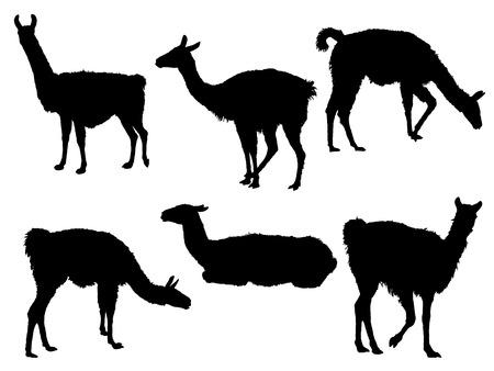 Llama silhouetten Stock Illustratie