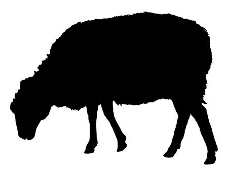 Sheep Silhouette