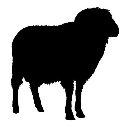 Silhouette ariete, immagine nera animale isolato su bianco Archivio Fotografico - 66526824