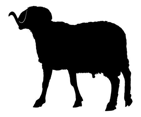 Afbeelding zwart dier geïsoleerd op wit ram silhouet,