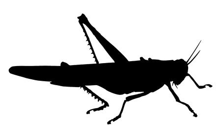 Grasshopper. Silhouette of grasshopper Ilustração