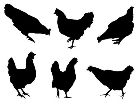 Hens silhouette