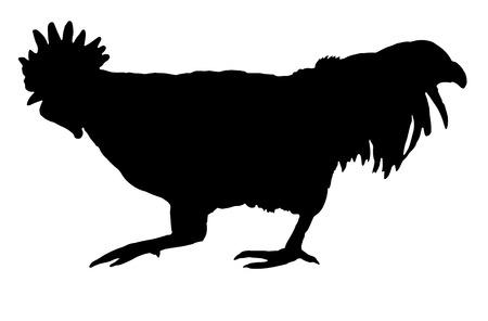 Rooster Silhouette Ilustração