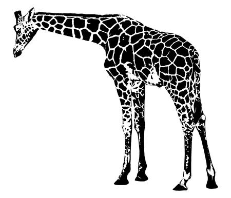 Giraf vectorafbeeldingen op witte achtergrond illustratie.