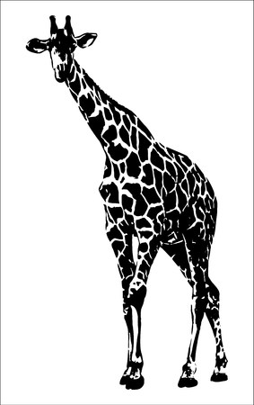 Giraffe vector graphics on white background illustration.