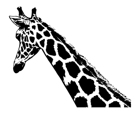 Giraffe head illustration on white background.