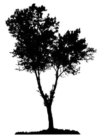Tree silhouette on white