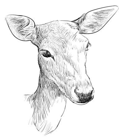 Ciervo hembra, ilustración dibujada a mano