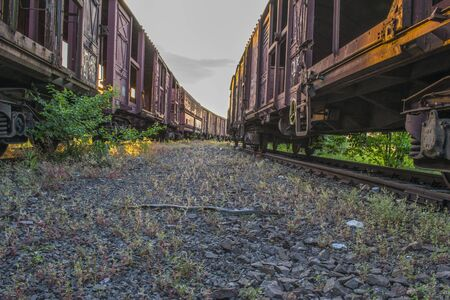 Small snake on path between two railroad trucks Stock Photo