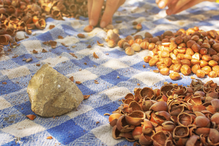 Cracked hazelnuts on the table with stone used for cracking the hard nutshell and female hands working 免版税图像