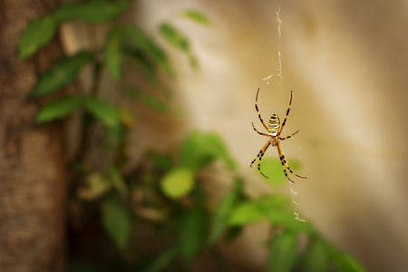 Big yellow spider hanging on the net in front of the plants inside of the greenhouse