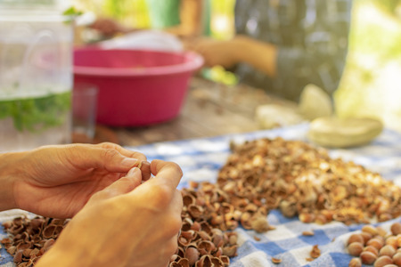 Young female hands in Hazelnuts cracking process with other people in the background