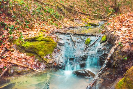 Small autumn stream in autumn. Water flowing over colorful moss and dry fallen leaves 免版税图像