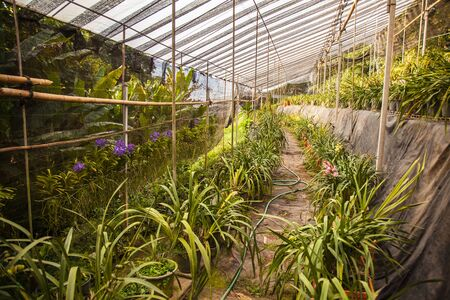 orchid house: plant green house garden orchid flower nursery