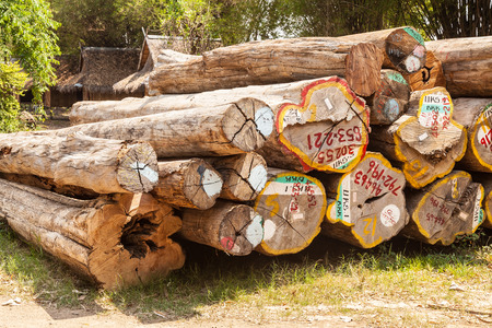 workable: timber logs after restoration works in a forest