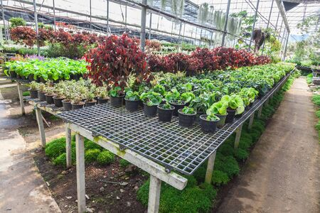 growing flowers: Interior of a greenhouse, full of growing flowers and plants