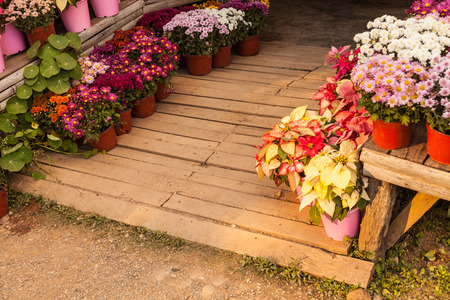 Wooden path way with beautiful flowers in the park Imagens