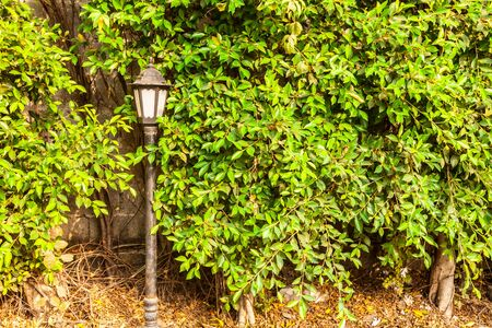 old black lamp near the green tree in the park