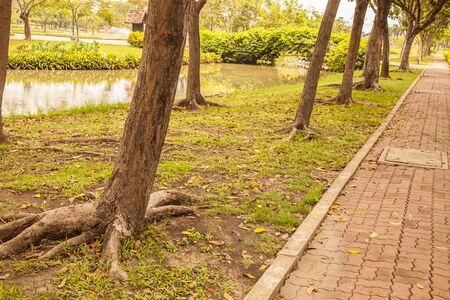 walkway winding through a tranquil garden. Stock Photo
