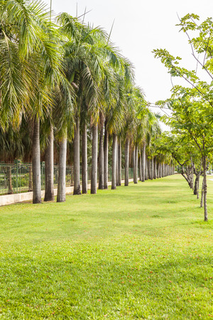 View of palm trees road in thailand Stock Photo