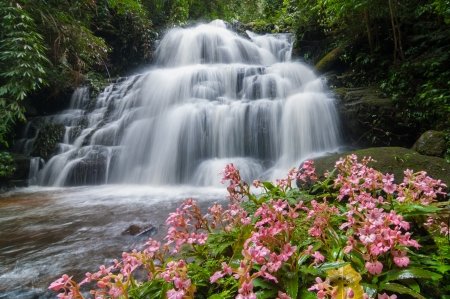 A beautiful wild orchid   Habenaria rhodocheila   in front of waterfall  photo