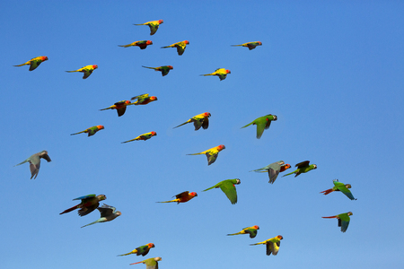 Small colorful birds flying in the sky. Stock Photo