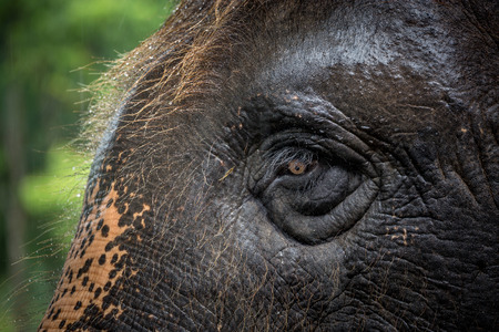Eyes and skin patterns of Asian elephants.