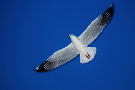 Seagulls are flying in the blue sky. Stock Photo