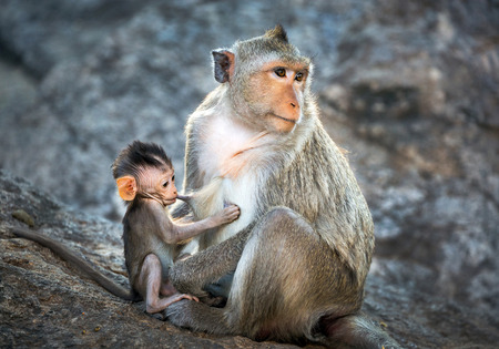 Mother and baby monkeys in the wild nature. 스톡 콘텐츠