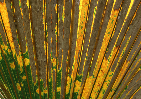 Colorful pattern of palm leaves for background. 스톡 콘텐츠