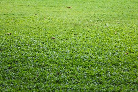green grass from garden