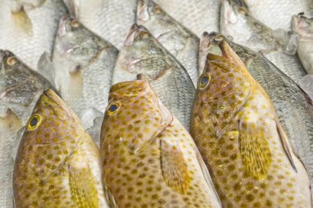 Fresh fish on ice on the market  Stock Photo