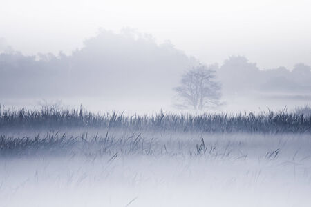 beautiful landscape in the morning fog Stock Photo