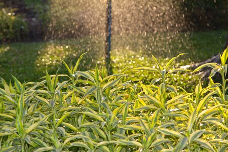 water sprinkler in garden Stock Photo