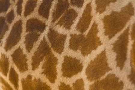 giraffe skin: Giraffe skin pattern for background Stock Photo