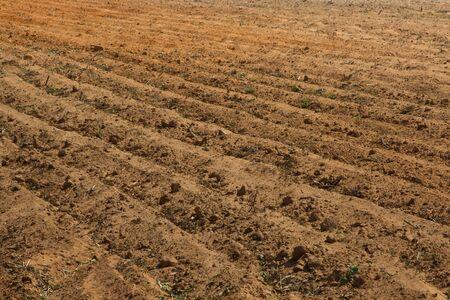 fertile: Brown, fertile, plowed soil of an agricultural field