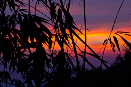 Bamboo silhouette and sunset Stock Photo